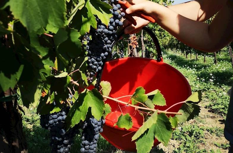 Visita e degustazione Calatroni Vini in Lombardia
