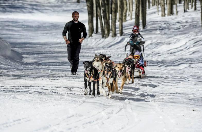 Sleddog, Escursione in Slitta e Lama Trekking sulle Dolomiti
