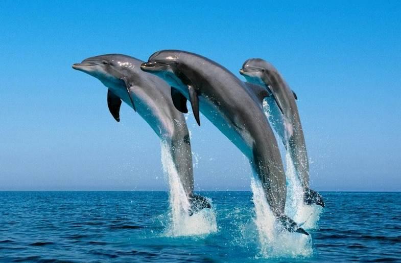 Tour dei Cetacei ad Alassio